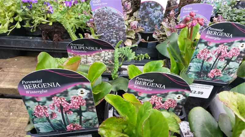 Tender Graft Personal Garden Shopper