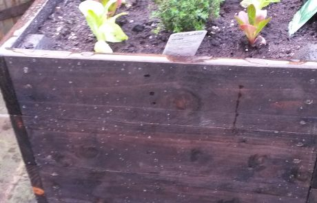 The bespoke raised bed we designed in the client's garden with vegetables growing
