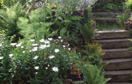 We have lots of ideas for planting steep gardens