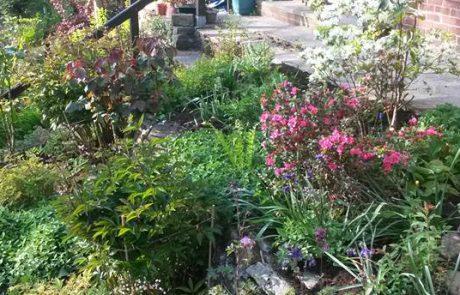 Soft Lanscaping & Garden Maintenance 2
