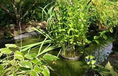 Garden Management Aquatics 2