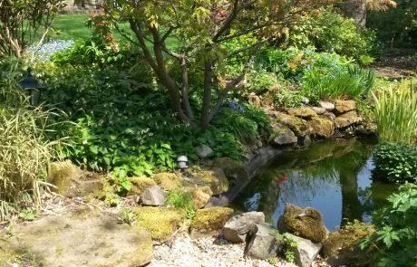 Garden Management Aquatics 4