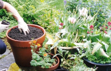 Garden Management by Tender Graft 5