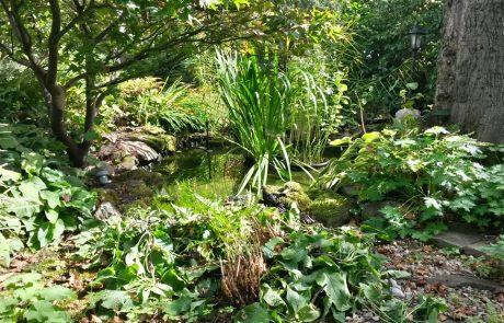 Garden Management Aquatics 1