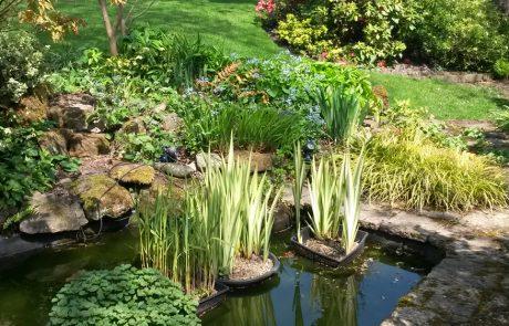 Garden Management Aquatics 3