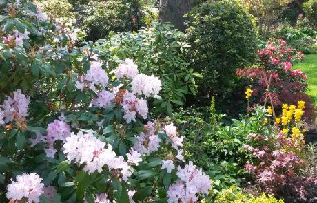 Garden Management - By Tender Graft 1