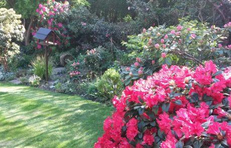 Garden Management - By Tender Graft 2