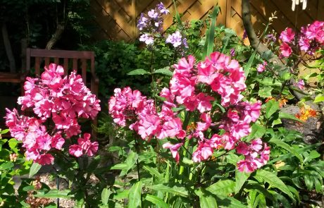 Garden Management - By Tender Graft 6