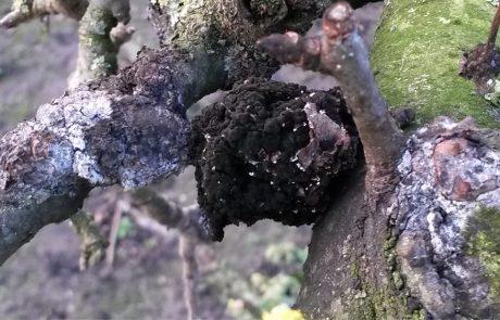 Garden management - Tackling Problems