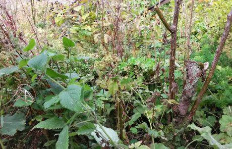 Garden Management - Weeds & Alien Invaders