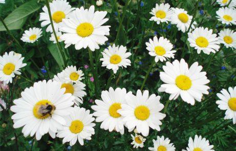 Garden Management - Wildlife Friendly Planting 8