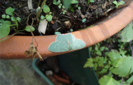 Garden Management - Wildlife Friendly Planting 9