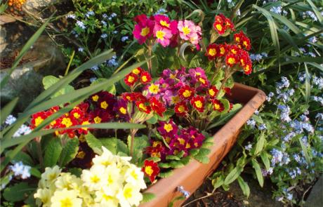 Garden Management by Tender Graft 3