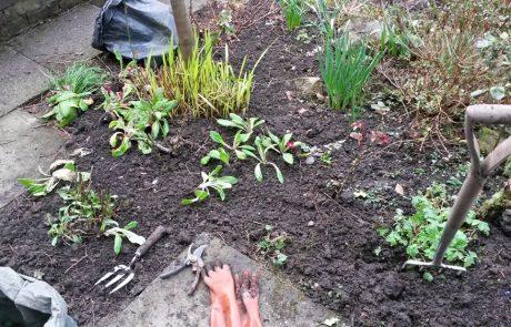 Garden Management - Borders