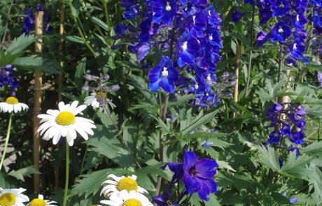 Garden Management - Borders 4