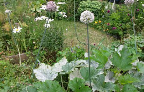 Garden Management - Borders 6