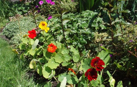 Garden Management - Borders 8