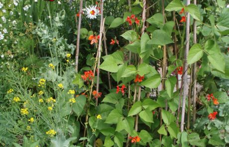 Tender Graft can help with growing vegetables 3
