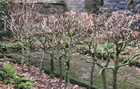 Hedge Renovation