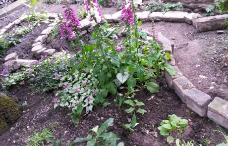 Garden landscaping with soft elements in a shady spot