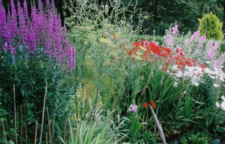 Tender Graft can carry our soft landscaping including planting borders.