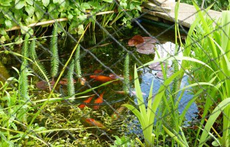 Garden Ponds can be as ornamental as a border